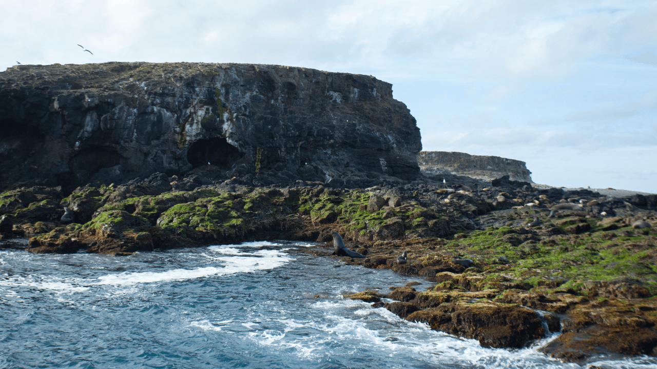 หนึ่งวันบนเกาะฟิลลิป หนีเมืองใหญ่ไปใกล้ชิดธรรมชาติ