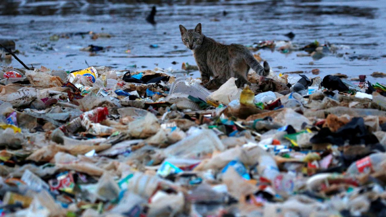 ไทยติดอันดับ 7 ประเทศที่ทิ้งขยะพลาสติกลงมหาสมุทรมากที่สุดในโลก
