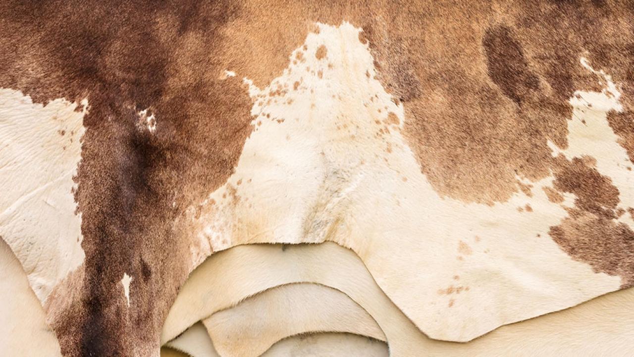 H&M แบน 'หนังวัว' จากบราซิล  จากบทเรียนไฟไหม้แอมะซอน  ที่มาจากการขยายพื้นที่ปศุสัตว์
