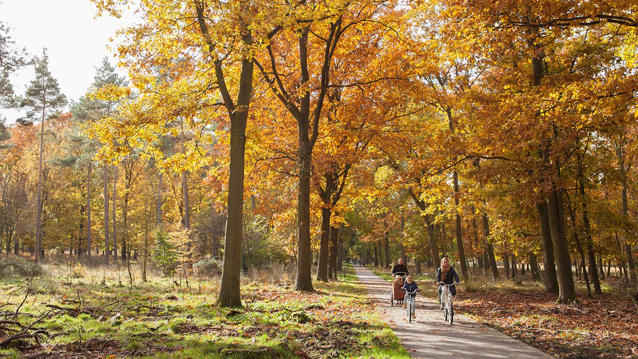 ให้สองขาพาเที่ยวอุทยาน พลางชมพิพิธภัณฑ์กลางป่าใน Hoge Veluwe