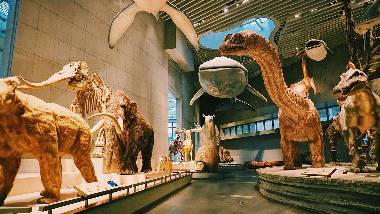 เดินเล่นในดงสัตว์ดึกดำบรรพ์ ที่พิพิธภัณฑ์ประวัติศาสตร์ธรรมชาติเซี่ยงไฮ้