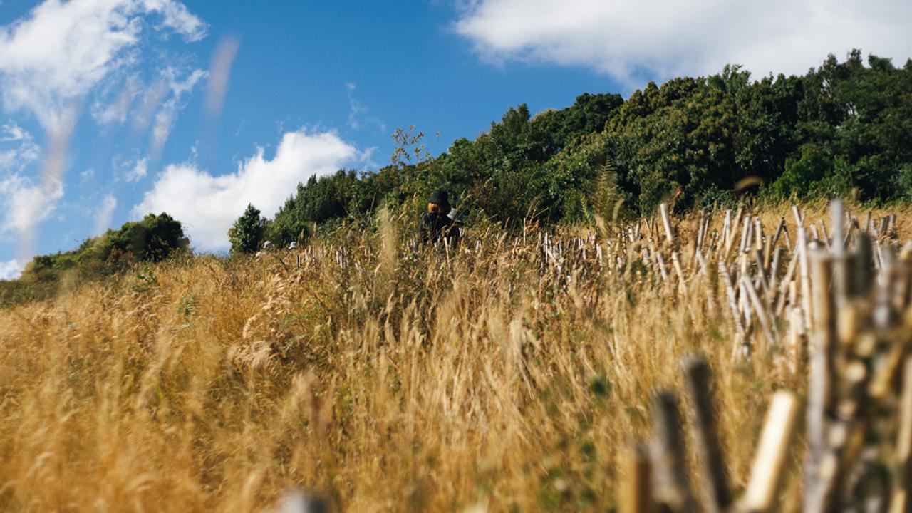 เส้นทางศึกษาธรรมชาติกิ่วแม่ปาน: 22 ปีที่เปิดรับนักท่องเที่ยว ได้เวลาปรับปรุงและฟื้นฟู